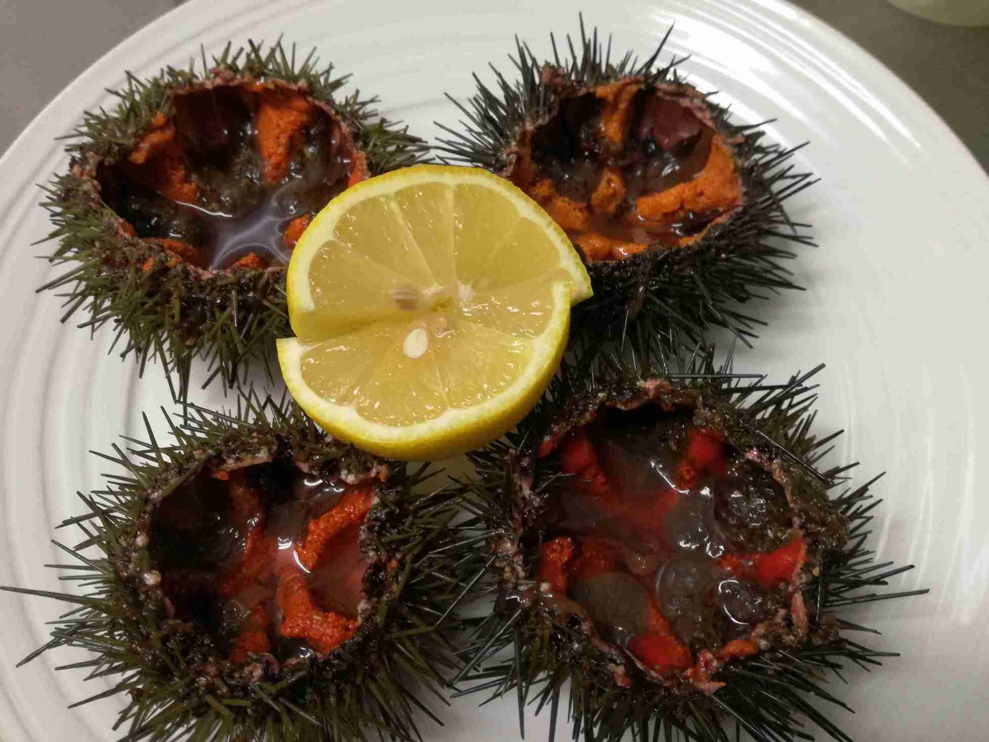 restaurante-marisqueria-valencia-islas-canarias-puerto-ciudad-artes-ciencias-erizo-mar